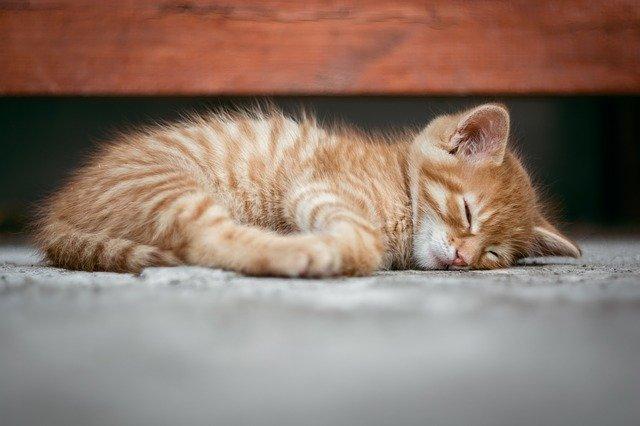 Gdzie powinien spać mały kot?