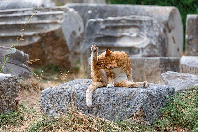 Czy kąpanie kota jest konieczne?