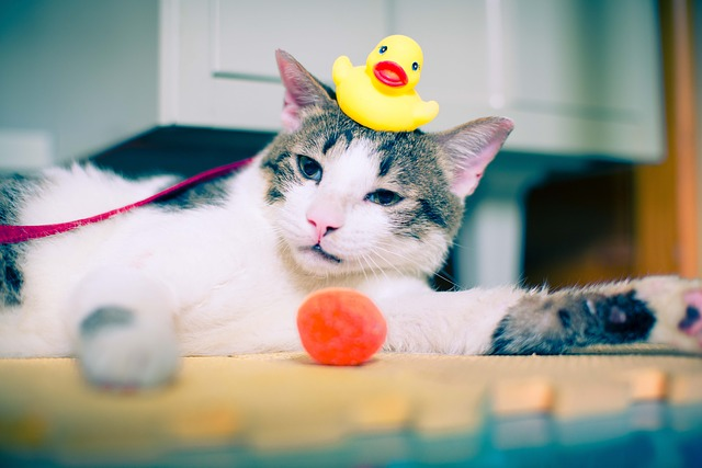 Jak wykąpać kota?