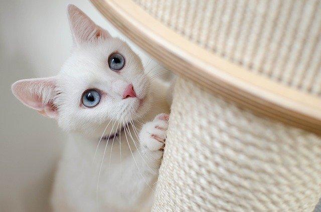 Jaki drapak dla kota wybrać?