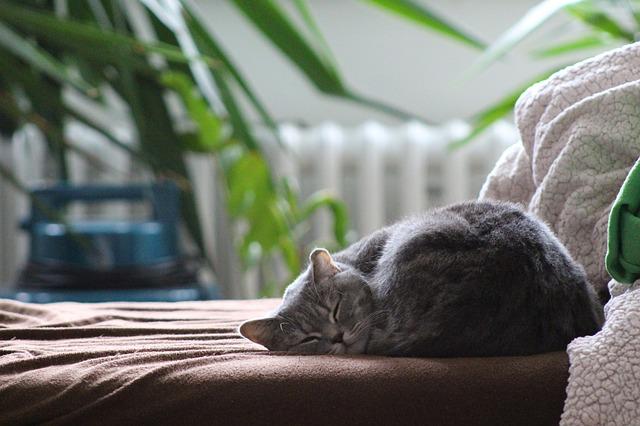 Pierwsze dni kota w domu